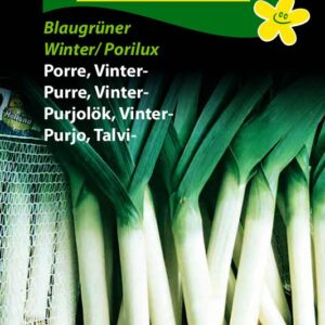 Purre, Vinter - Blaugrüner Winter/ Porilux (Allium porrum)