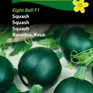 Squash - Eight Ball F1 (Cucurbita pepo)
