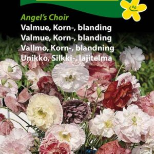 Valmue, Korn-, blanding - Angel's Choir (Papaver rhoeas)