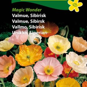 Valmue, Sibirsk - Magic Wonder (Papaver nudicaule)