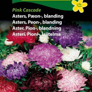 Asters, Peon-, blanding - Pink Cascade (Callistephus chinensis)