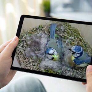 Fuglekasse & Kamera-pakker